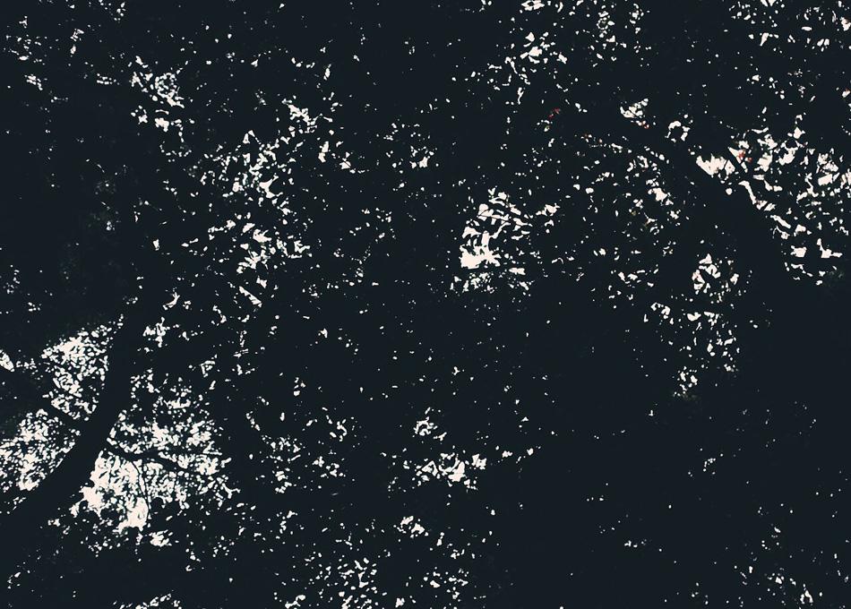 森を見上げればまちの灯り。幹は川に。