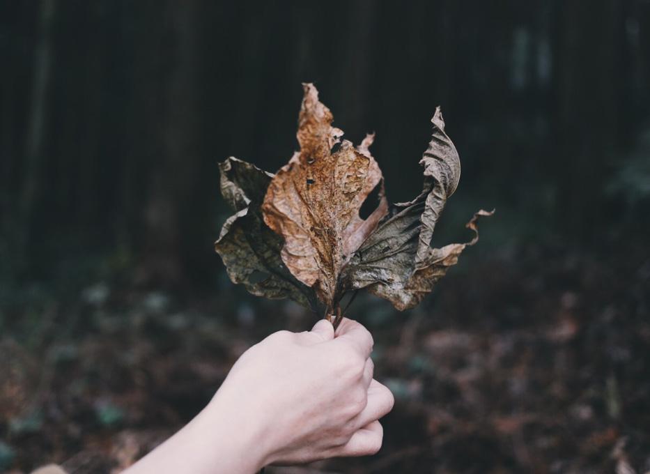 枯葉(葉っぱ)は、もっとも身近で最良な創造力を促す道具。葉脈はまちの道、もしくは想い出。