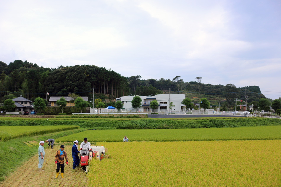 園舎の前の田んぼでは収穫。しあわせな稲の香り。